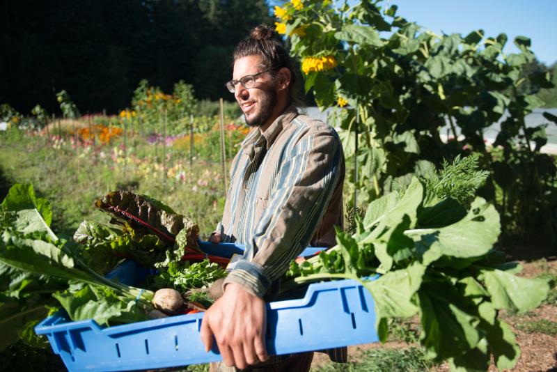 Organic Farm Harvest