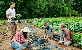 Planting at the Organic Farm