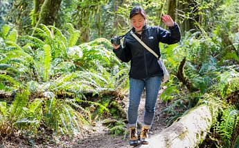 The Evergreen Woods