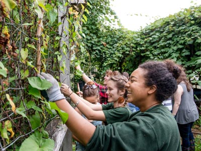 Students at GRUB harvest fruit as a team.