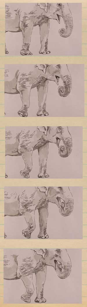 Highlights of Elephant Evolution Image