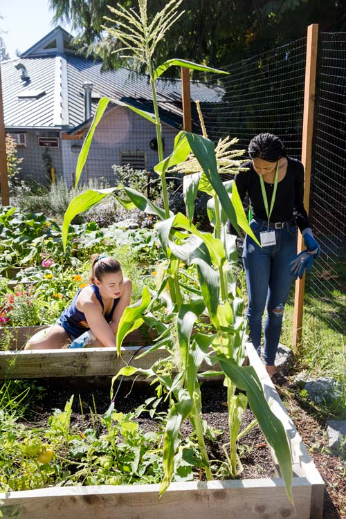 Grow your own vegetables in the community garden