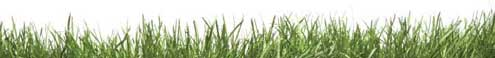 image of grass