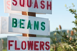 squash beans flowers sign
