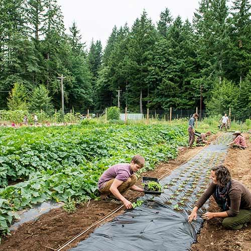 The Organic Farm