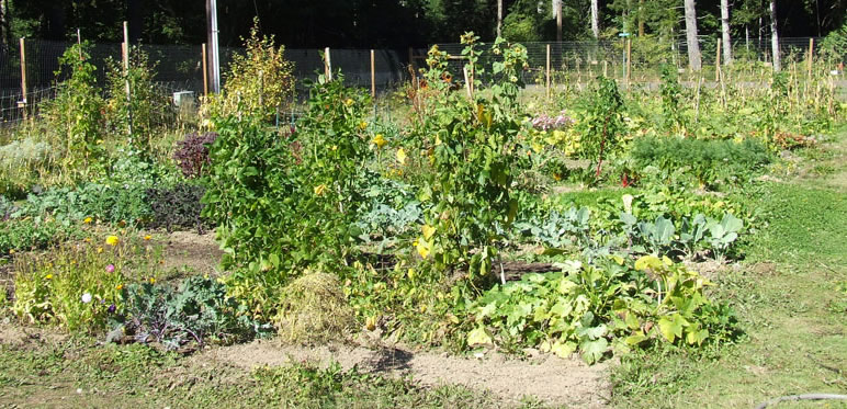 Evergreen Community Gardens The Evergreen State College