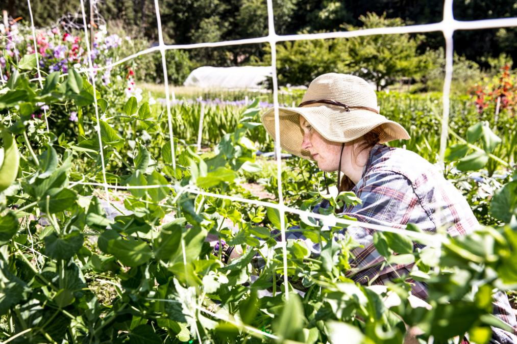 A student tends plants in Evergreen's organic farm