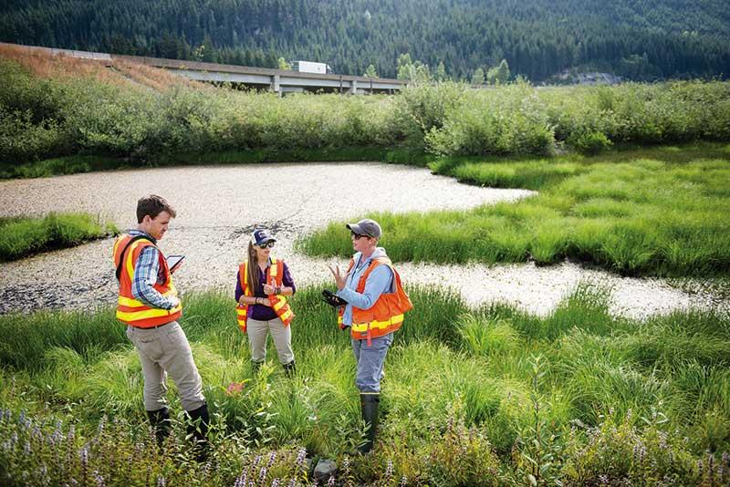 WSDOT Wetlands Internship Field