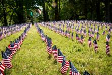 Memorial day flags planted in the lawn