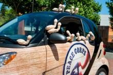 A Peace Corps car with Evergreen geoduck plushies all over it