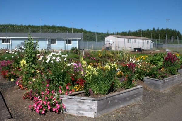 Aberdeen prison garden